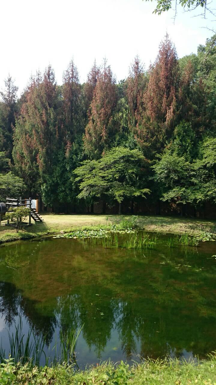 憩いの森3.jpg