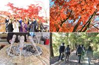 紅葉シーズン中の高尾山遠足