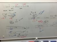 生物の授業 どんどん増えていくタンパク質