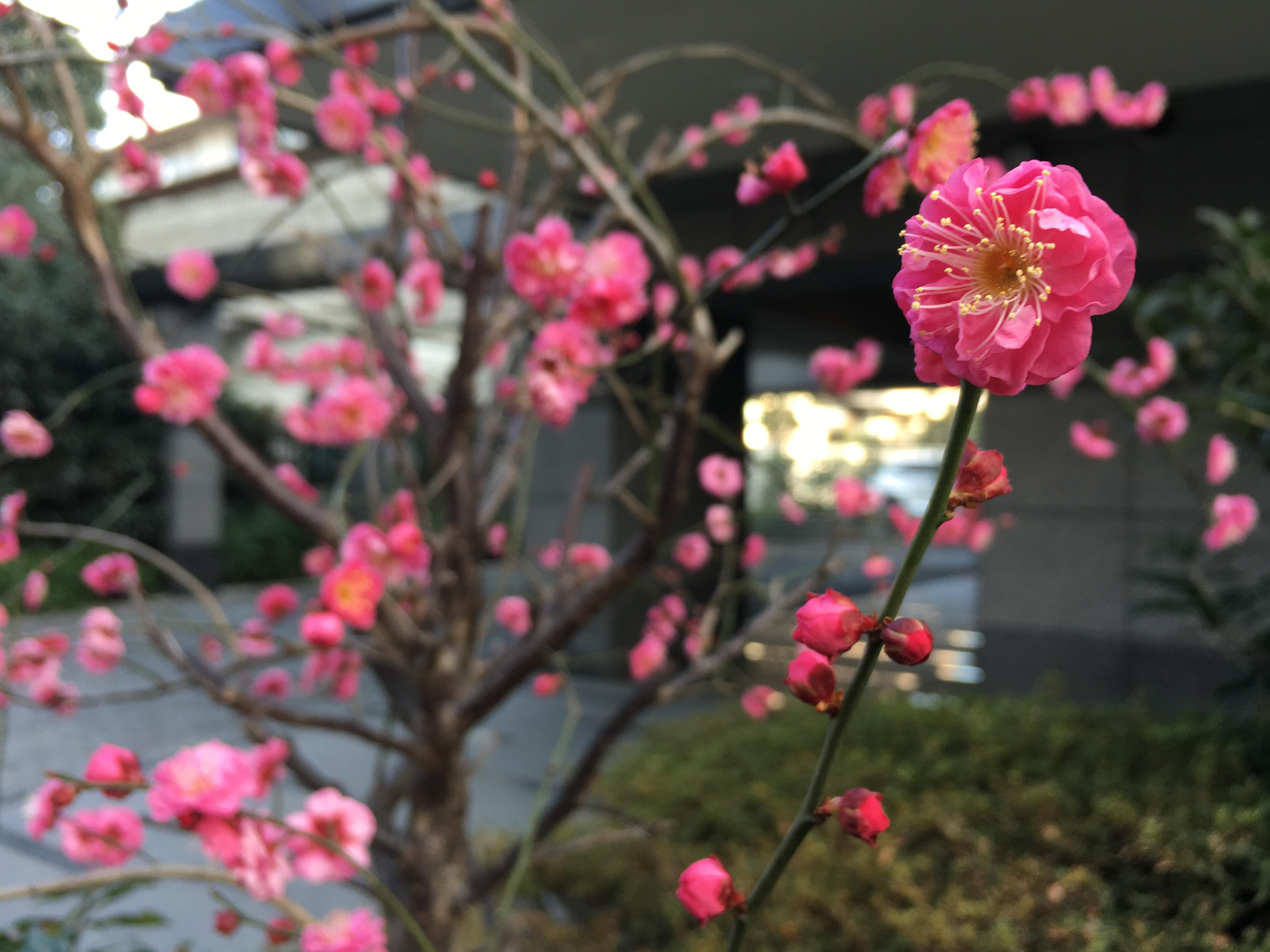 写真 2016-02-04 8 27 53.jpg