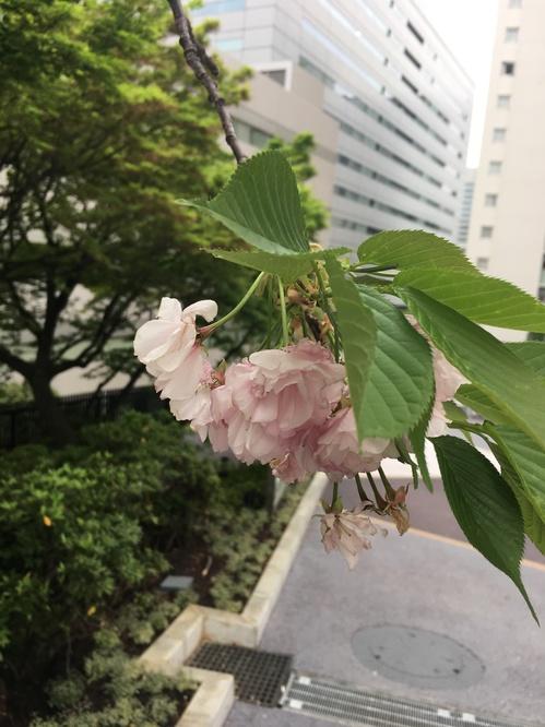 写真 2016-04-10 16 11 03.jpg