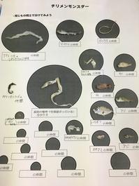 チリメンモンスターで背骨のある動物、ない動物