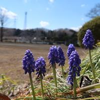 小さな春 そこかしこに...。