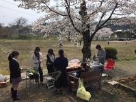 桜満開の下、第1回アクティビティ2017開催!