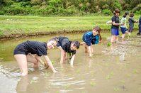 新宿代々木キャンパスの生徒も田植え体験!