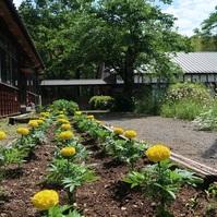 ルネ高 花壇を夏バージョンへ