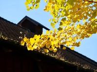 色づく木々、秋のルネ高