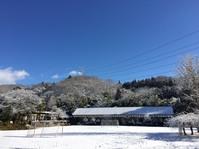 今季二度目の雪化粧