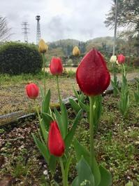 山笑い、花しぼむ雨のルネ高