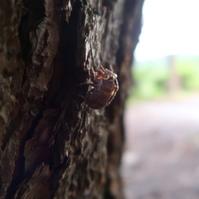 蝉だらけのルネ高 ww