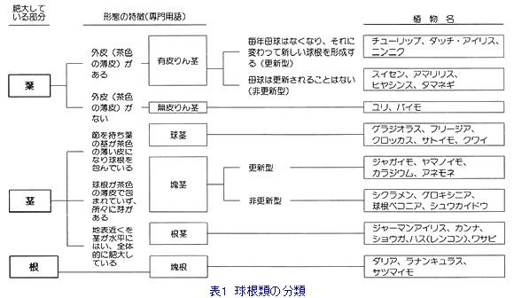 球根類の分類.jpg