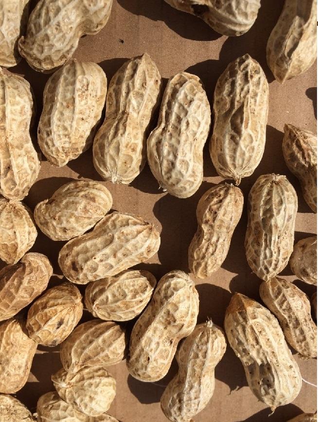 peanut02sb.jpg