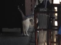 ネコのしっぽ
