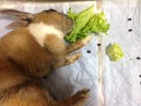 介護ウサギ,その後