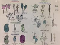実験実習の「生物教材」を手配