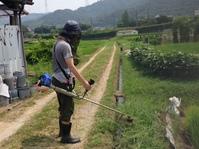 農業体験クラブ 田に肥料をまく