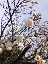 もうすぐ春です