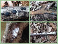 粘菌を求めて先人が歩いた森へタイムトラベル