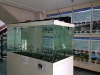 淀川に生息する淡水魚の見分け方講習会に参加