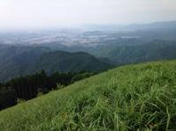 岩湧山の萱 (かや)