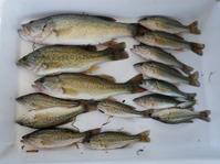 淀川河川公園のBBQ打ち上げで外来魚を食す