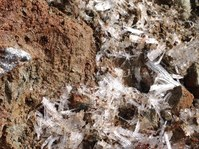 地面から生えてくる 「氷の植物」=霜柱
