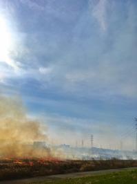春を告げる風物「鵜殿のヨシ原焼き」体験