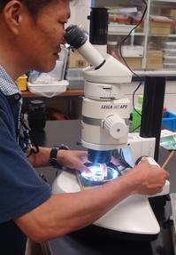 滋賀県「琵琶湖講習」で水生昆虫を学ぶ