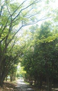 「南港野鳥園」の干潟観察会で得た学び