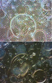 摩訶不思議な生物「珪藻」の総説を書く学び