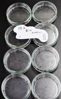 「キモカワ巻貝」による寄生虫学入門