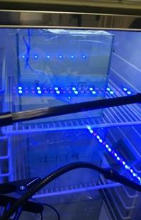 流下珪藻の循環式水槽を用いた集積培養