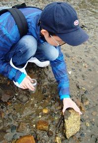 ハズレなし!_イシマキガイの幼貝に遭遇