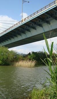 米国ハドソン川に倣い「河川教育」を海外発信しよう!