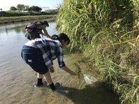 安威川でヌマエビ採りに興じた一日